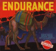 endurance.campos0328.down