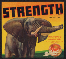 strength.campos0845.down