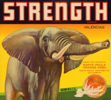 strength02
